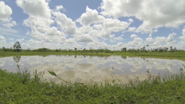 vídeos de stock e filmes b-roll de tambaqui and pacu (serrasalmus) fish farming in yapacani, bolivia - pimenta do reino