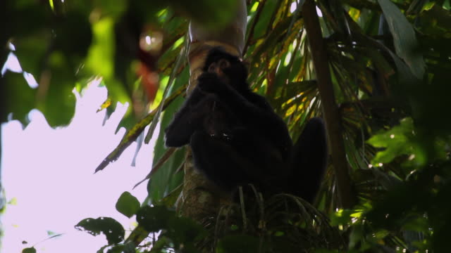 tambopata national reserve, madre de dios-peru - tambopata stock videos and b-roll footage