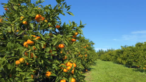 tangerine garden - orange stock videos & royalty-free footage
