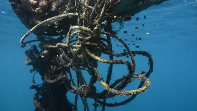 tangled ropes. - ゴーゴニアンコーラル点の映像素材/bロール