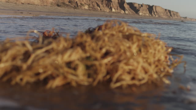 tangled seaweed on beach, close up - seaweed stock videos & royalty-free footage