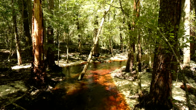 tannic stream in eroded floodplain all - florida us state stock videos & royalty-free footage