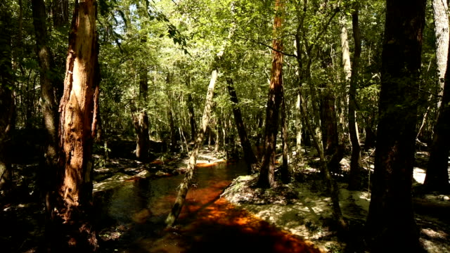 tannic stream with eroded floodplain - florida us state stock videos and b-roll footage