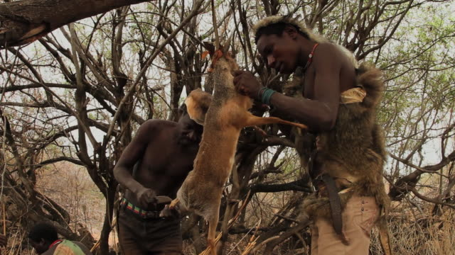 tanzania- hadza tribe - indigenous culture stock videos & royalty-free footage
