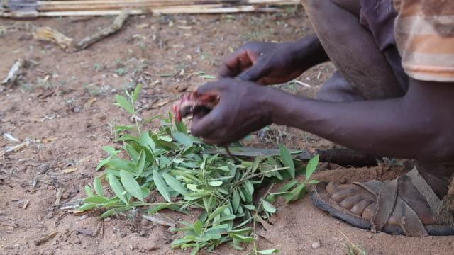 tanzania, lake eyasi, hadzabe tribe,  hunters eating a squirrel and a pigeon - hunting stock videos & royalty-free footage