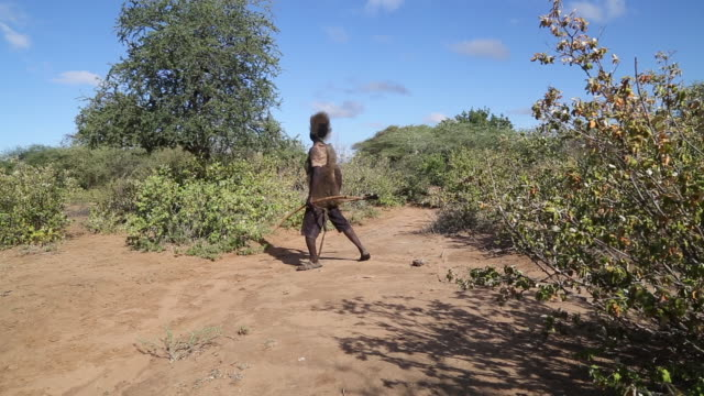 tanzania, lake eyasi, hadzabe tribe, hunters walking between baobab tree with bow and arrows - arrow bow and arrow stock videos & royalty-free footage
