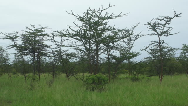 tanzania landscape (static) - wiese stock videos & royalty-free footage
