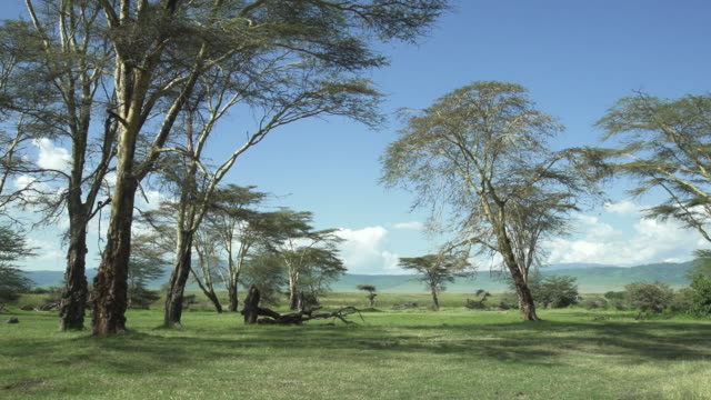 tanzanian landscape pan - wiese stock videos & royalty-free footage