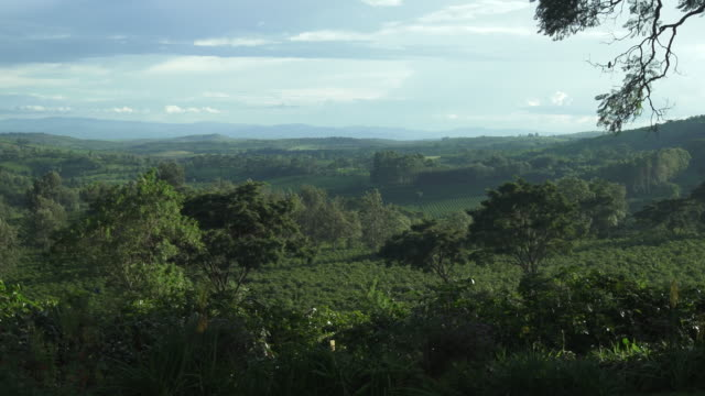 tanzanian landscape vista - wiese stock videos & royalty-free footage