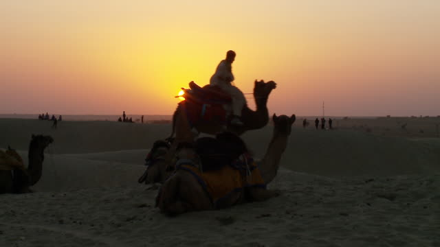 vidéos et rushes de ws tar dessert at sun setting with camel rider / sam sand dunes, rajasthan, india - animaux au travail