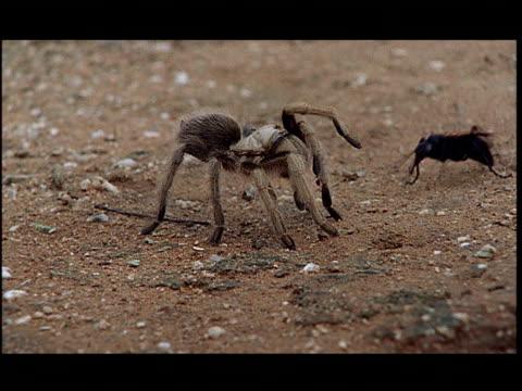 a tarantula fights with a wasp. - aggression点の映像素材/bロール