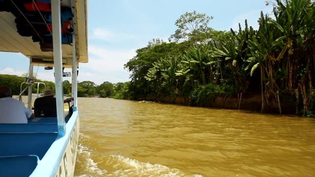 tarcoles river cruise, costa rica, central america - provinz puntarenas stock-videos und b-roll-filmmaterial
