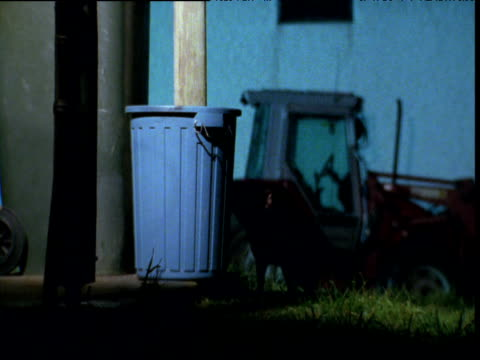 Tasmanian devil pulls over rubbish bin on farm at night, Tasmania