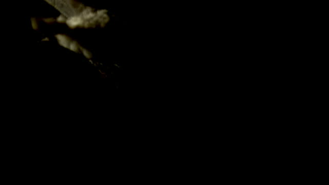 tawny owl (strix aluco) takes off into night sky with prey, uk - chiaroscuro stock videos and b-roll footage