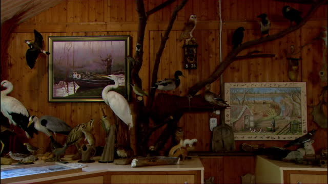 taxidermy animals fill a room in a house. - stuffed stock videos & royalty-free footage