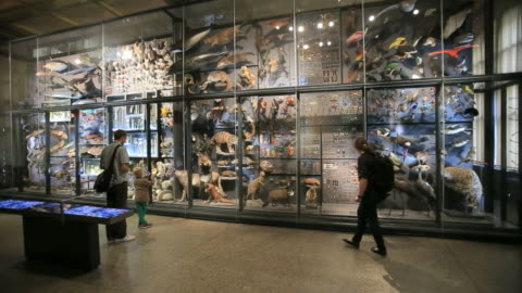 taxidermy exhibition at berlin natural history museum, berlin  - window display stock videos & royalty-free footage