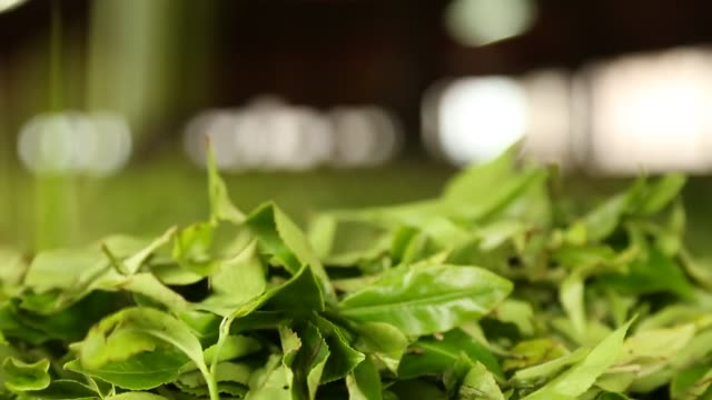 tea - extreme close up of tea leaf falling in a withering loft - plantation stock videos & royalty-free footage