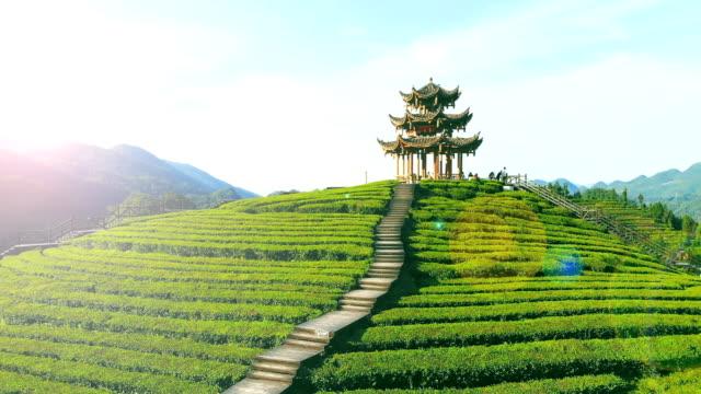 vídeos de stock e filmes b-roll de tea field - casa de jardim