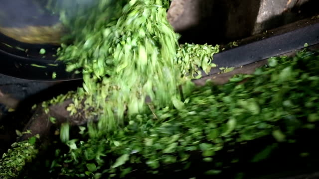 tea leaves in process in the workshop - group of objects stock videos & royalty-free footage