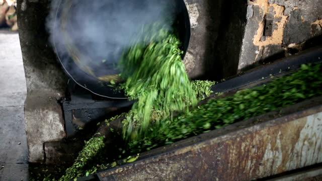 tea leaves in process in the workshop - dried tea leaves stock videos & royalty-free footage