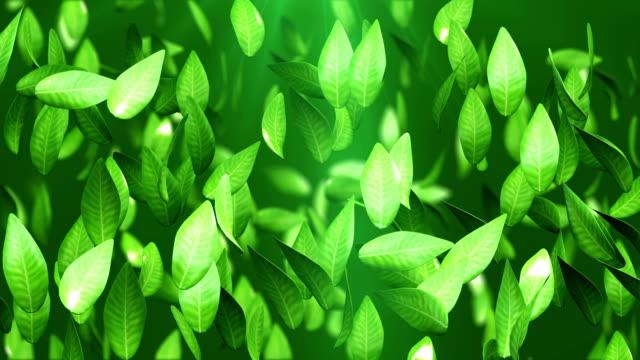 tea leaves - chinese tea set stock videos and b-roll footage