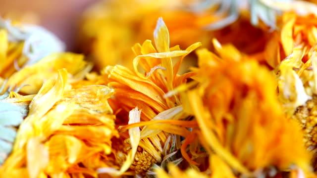Tea Marigold.