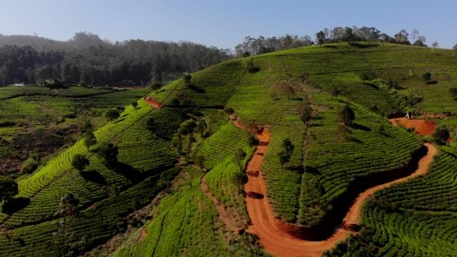 tea plantation aerial - tè raccolto video stock e b–roll