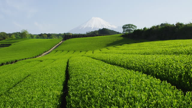 vídeos y material grabado en eventos de stock de tea plantation and mt. fuji - té cultivo