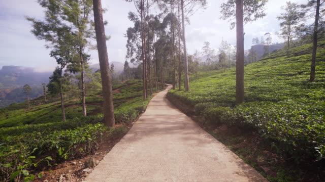 vidéos et rushes de tea plantation at nuwara elyia, sri lanka. walking with steadicam - thé noir