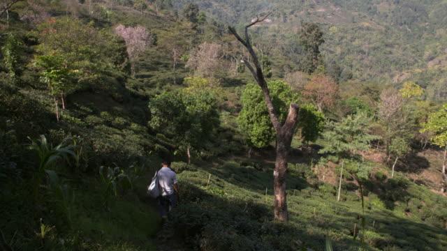 tea plantation in darjeeling west bengal - westbengalen stock-videos und b-roll-filmmaterial