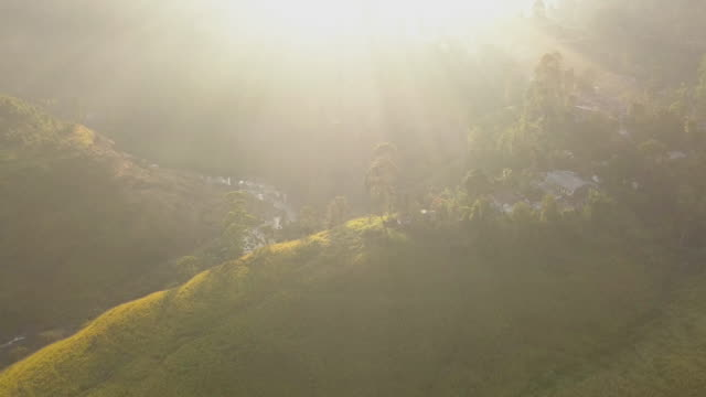 tea plantation in nuwara eliya at sunrise, sri lanka - sri lankan culture stock videos & royalty-free footage