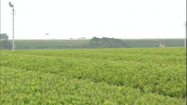 a tea plantation stretches along the mt. fuji shizuoka airport in makinohara, japan. - shizuoka prefecture stock videos and b-roll footage