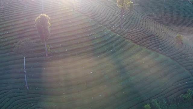 tea plantation - grounds stock videos & royalty-free footage
