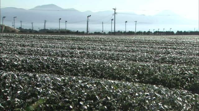 tea plantation - telegraph pole stock videos & royalty-free footage