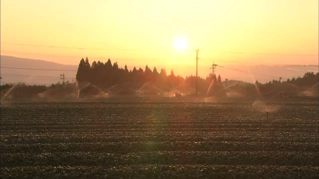 Tea Plantation With Sprinkler System