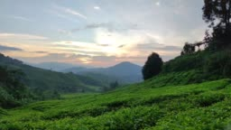 Tea Plantations in Cameron Highlands Malaysia. Sunrise in early morning.