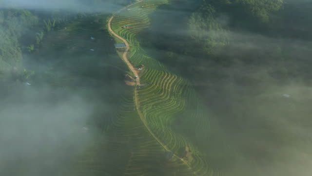 tea terrace with fog in the morning aerial view dolly right shot - tea crop stock videos & royalty-free footage