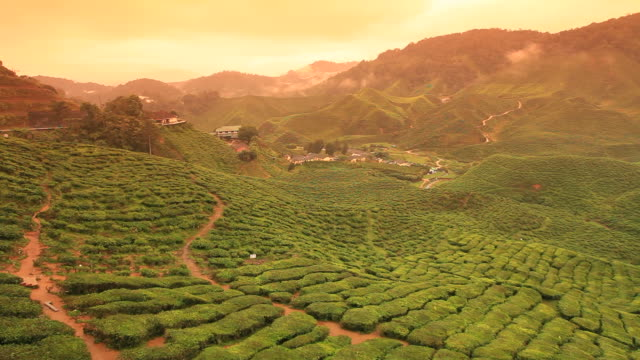 valle di tè - tè raccolto video stock e b–roll