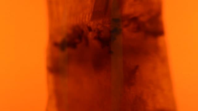 bustina di tè in macro - dissolvere video stock e b–roll