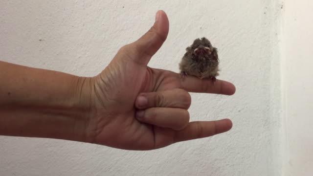 stockvideo's en b-roll-footage met leer baby vogels om te leren vliegen - lichaamsdeel van dieren