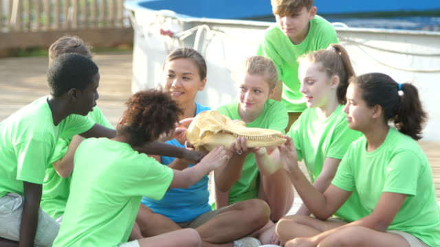 teacher and children examining model of dolphin head - summer camp helper stock videos & royalty-free footage
