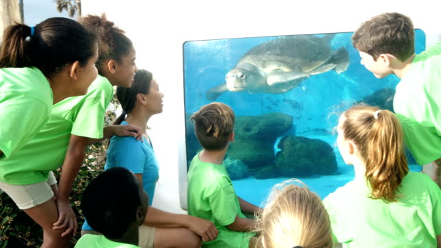 teacher and children watching sea turtle at aquarium - zoo stock videos & royalty-free footage