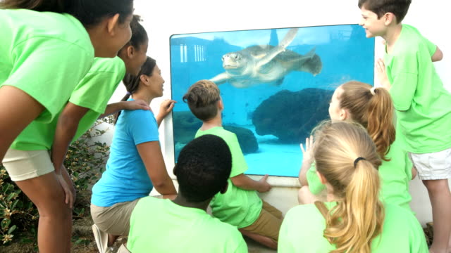teacher and children watching sea turtle at aquarium - pacific islander male stock videos & royalty-free footage