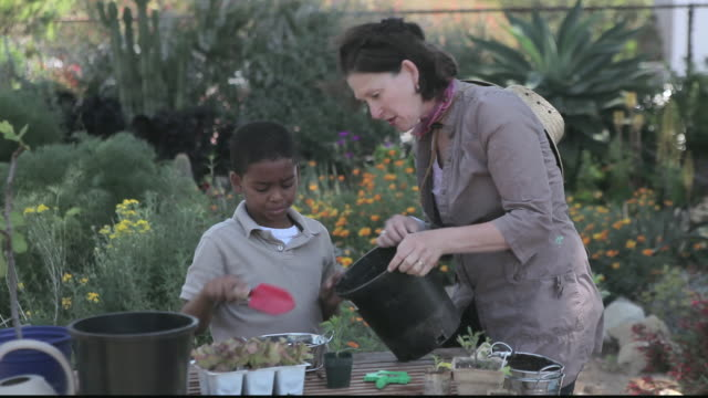 ms teacher helping little boy with a pot of soil / los angeles, california, united states - breitwandformat stock-videos und b-roll-filmmaterial