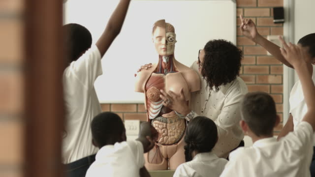 stockvideo's en b-roll-footage met teacher teaching in biology class, using torso - scherpte verlegging