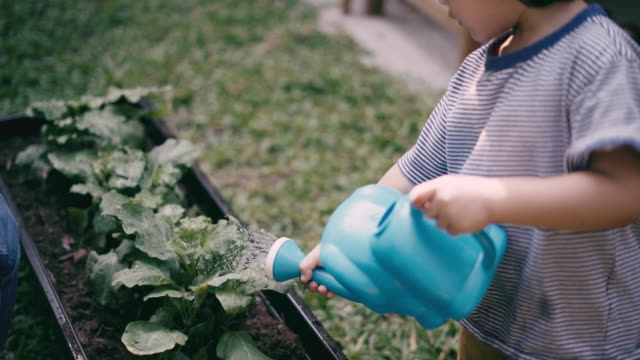teaching boy to grow vegetables and water the plants - toddler stock videos & royalty-free footage