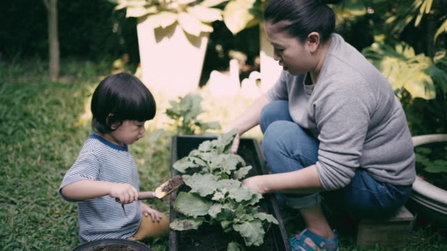 teaching child boy to grow vegetables - community garden stock videos & royalty-free footage