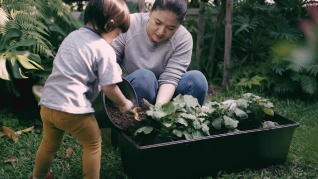 vidéos et rushes de enseigner à l'enfant garçon à cultiver des légumes - potager