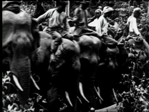 teak logging with elephants - arbeitstier stock-videos und b-roll-filmmaterial