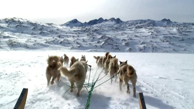 A team of dogs pull a sled over the snow.